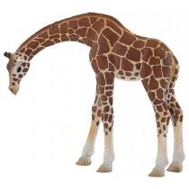 Deco Bolo Girafa